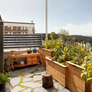 Огород на балконе: Как выращивать фрукты и овощи в городе