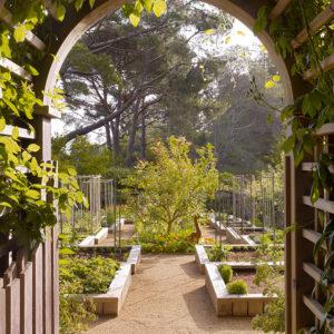 Осень на участке: Планируем деревья… в огороде