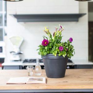 Счастливые комнатные растения — счастливые хозяева