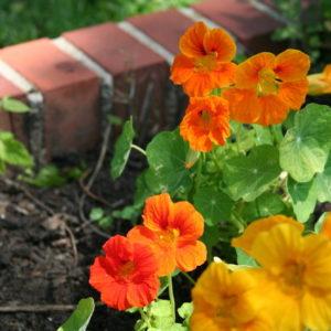 Действуйте: Отговорки, которые мешают вам быть садоводом