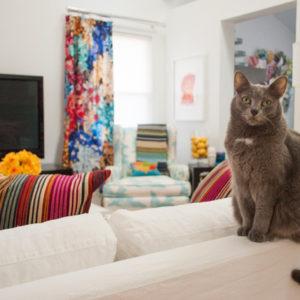 А шубу в шкаф: 5 способов пережить кошачью линьку