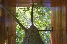 Архитектура: Как ужиться с растущим в доме деревом