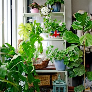 Блиц-озеленение: Как получить цветущий балкон за два дня