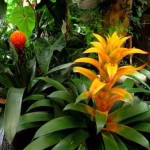 Гватемала: Райский сад, в котором всегда царит весна