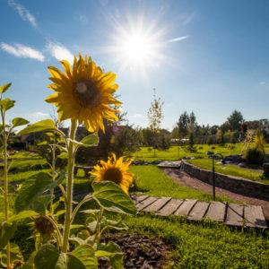 Прощание с летом: Садовый календарь на август
