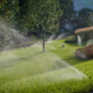 До чего дошел прогресс: Умные технологии в вашем саду