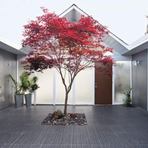Японский сад: Только смотреть, руками не трогать