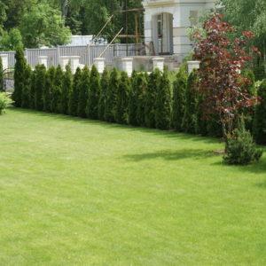 Рулонный газон: Лужайка, которую можно взять с собой