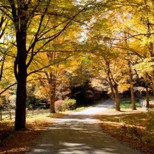 call: Покажите нам золотую осень, которую вы видите из окна