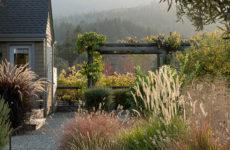 Хороший вопрос: Как выбрать лучшие злаки для вашего сада