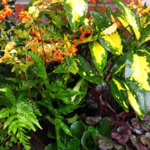 Денежное дерево: Топ-10 комнатных растений для богатства