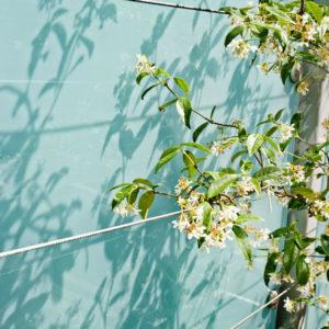 call: Покажите нам весну, которую вы видите из окна
