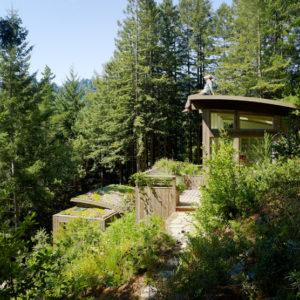 Рубить нельзя оставить: Что делать со взрослыми деревьями на даче