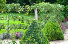 Как правильно: Уход за плодовыми деревьями и кустарниками