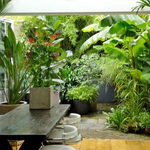 в саду: Тропический сад в Лондоне — всего 32 кв.м