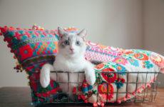 Фотоохота: Домики для кошек своими руками — 40 идей