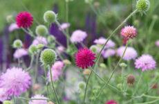 Сад легкого ухода: Луг вместо газона