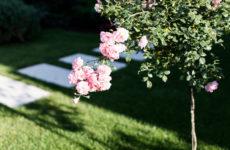 Хороший вопрос: Минимум растений в саду — это сколько