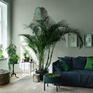 Дизайн-дебаты: Какими растениями украшать жилой интерьер