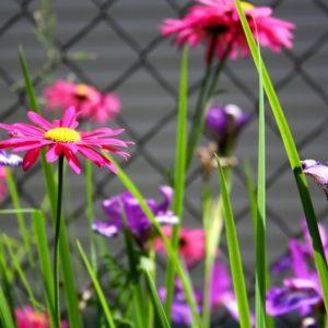 Как правильно: Сочетать растения по цвету на клумбе