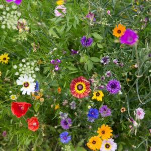 Как правильно: Создать клумбу непрерывного цветения
