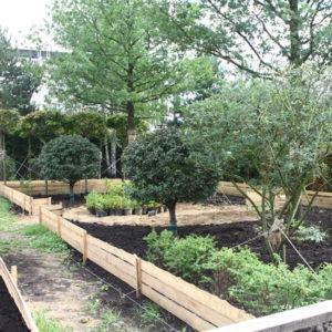 Как правильно: Посадить сад осенью