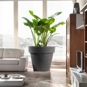 Вопрос: Как выбрать кашпо для больших растений