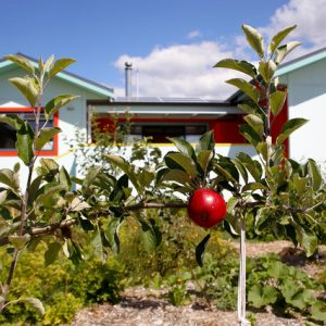 Новая Зеландия: Яркий дом с цветными рамами