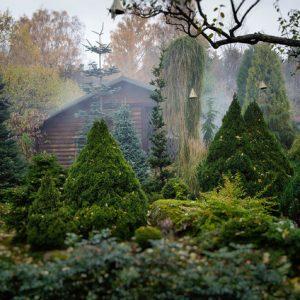 Хвойный сад на Карельском перешейке